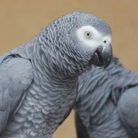 Assurance perroquet : mutuelle en ligne